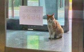 [비하인드] 고양이 체다는 왜 출입금지를 당한 걸까